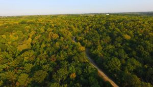 aerial view from treetops